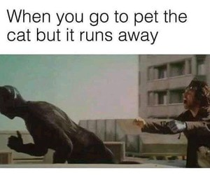 funny, Marvel, and black panther image