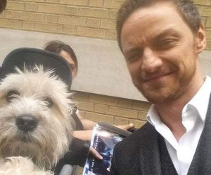 actor, dog, and funny face image