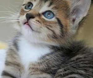beautiful, wallpaper, and cat image