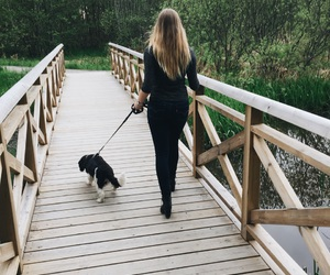 bridge, dog, and forest image