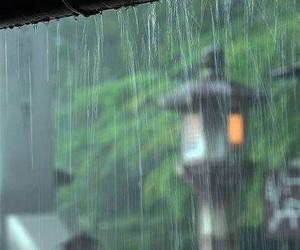 rain and nature image