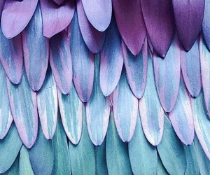 blue, purple, and feather image