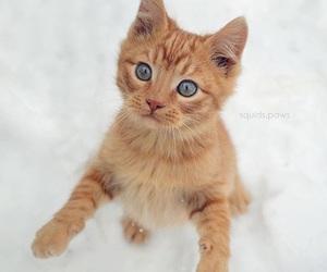 ginger+cat image