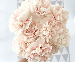 flowers, pink, and theme image
