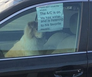 dog, funny, and car image