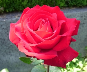 beautiful, natural, and red image
