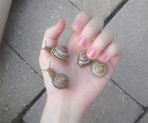 pale, hand, and snail image