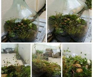 diy, micro, and terrarium image