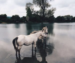 horse, nature, and tree image