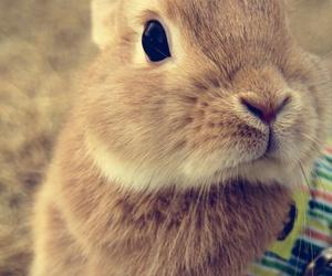 animal, mascotas, and animals image