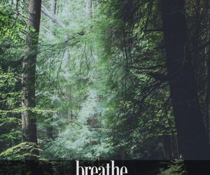 breathe, forest, and green image