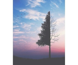 sky, tumblr, and tree image