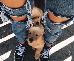 beautiful, cool, and dogs image