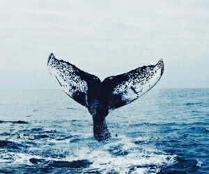 blue, whale, and indie image