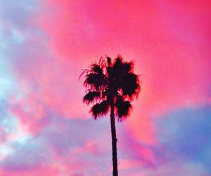 blue, palm trees, and pink image