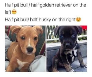 dog, puppy, and golden retriever image