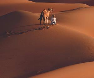 arab, camel, and desert image
