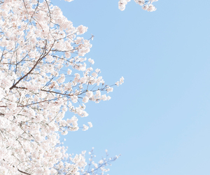 blue, cherry blossom, and pink image