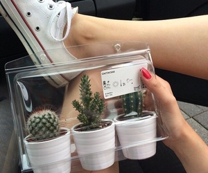 cactus, hipster, and converse image