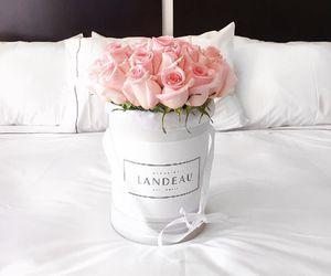 Blanc, fresh, and pink image