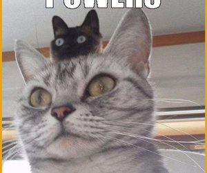 cat, funny cat, and funny cats image