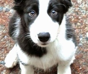 cute, dog, and pet image