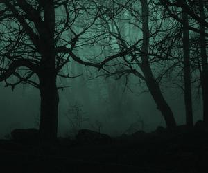 dark, forest, and green image