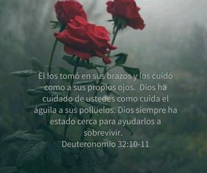 amor, bible, and cuidado image