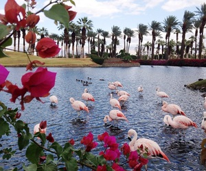 nature, flamingo, and flowers image