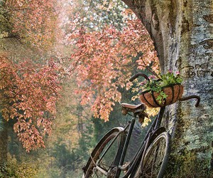 bicycle, tree, and nature image
