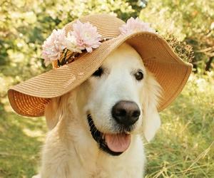 dog, animal, and hat image