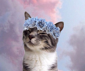 art, cats, and flower crown image