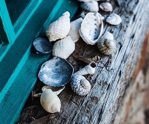 sea, shell, and beach image