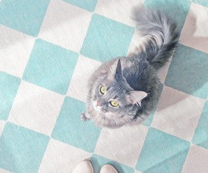 kitten, animal, and kitty image