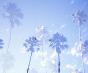palms, blue, and summer image