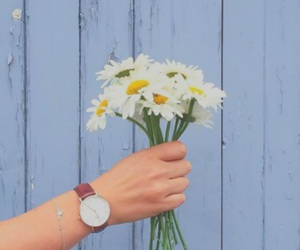 flowers, daisy, and watch image