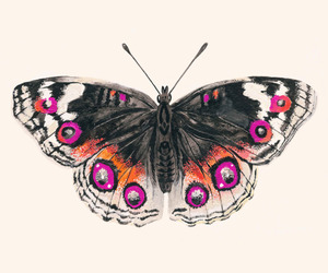 drawing and butterflies image