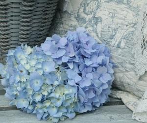 blue, flower, and hydrangea image