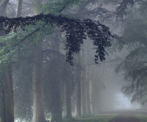 fog, forest, and lane image