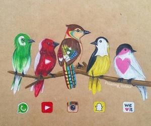 bird, instagram, and youtube image