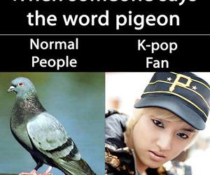 eli, bird, and funny image