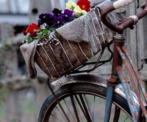 bike, flowers, and old image