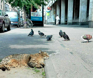 birds, cat, and caturday image