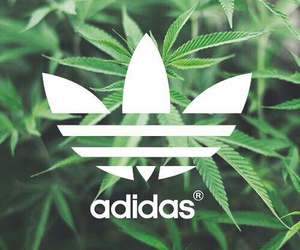 adidas, leaf, and wallpaper image