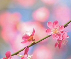 spring, flowers, and love image