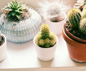 cactus, plants, and home image