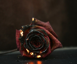 beauty, burning, and fire image