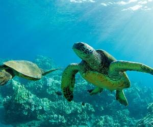 animals, turtles, and sea image