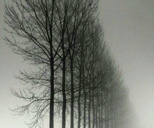 black and white, dark, and trees image