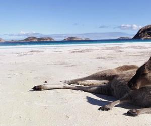 kangourou, plage, and summer image
